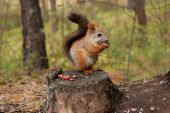 Squirrel forest — Stock Photo