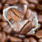 Falling roasted coffee beans with steam and milk — Stockfoto