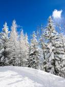 Snow trees — Stock Photo