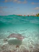 Over-under water at Bora Bora — Stock Photo