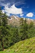 Trentino - Pejo valley on summer — Stock Photo