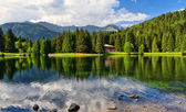 Lago dei Caprioli - Roe deer lake — Stock Photo