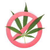 Hemp (cannabis) drugs interdiction — Stock Photo