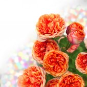 Orange roses bouquet with free space for text — Stock Photo
