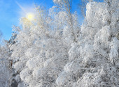Winter landscape with snowy trees — Stock Photo