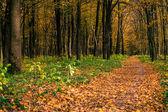 Autumn forest background — Zdjęcie stockowe