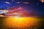 Field at Sunset — Stock Photo