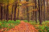 Autumn forest trees. nature green wood sunlight backgrounds — Stock Photo