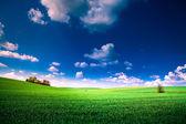 Зеленое поле и красивый закат — Стоковое фото