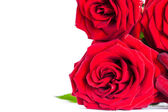 Bouquet of artificial red roses, isolated, space for copy in the — Stock Photo