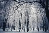 森の木の自然雪の木製の背景 — ストック写真
