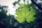 Las liści drzew. natura tło zielony światło słoneczne drewna — Zdjęcie stockowe