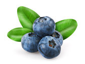 Blueberries with leafs — Foto de Stock