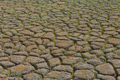 Dry cracked ground in the fields — Stock Photo