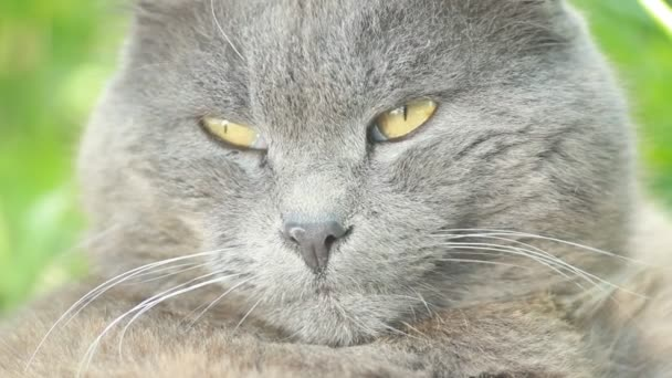 Картинки кошек на фоне природы