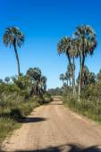 Palms on El Palmar National Park, Argentina — Fotografia Stock