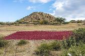 在阿根廷北部萨尔塔省 cachi · 阿登特罗 — 图库照片