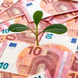 Sapling growing from euro — Stock Photo #61957163