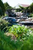 Alpine garden — Stock Photo