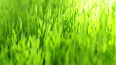 Move through the fresh green — Stock Video