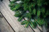 Green spruce branches — Stock Photo