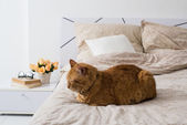 Cat sleeping on a bed — Stock Photo