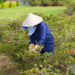 Vietnamese woman gardener — Stock Photo #65824201
