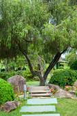 Branchy tree with wagon wheel — Stock Photo