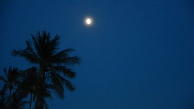 Moon over palm trees — Stock Video