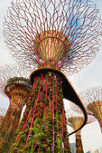 Walking bridge on Super trees in Gardens by the Bay Singapore — Stock Photo