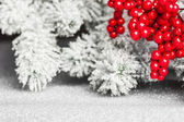 European holly and fir-tree, shallow DOF — Stock Photo