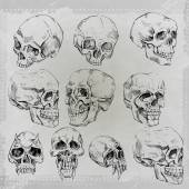 Sketched skulls set — Stock Vector