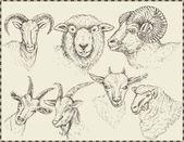 Farm animals heads — Stock Vector