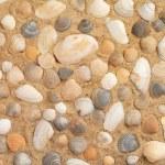 Wet shells on sunny beach — Stock Photo #65671971
