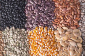Cereal grains — Stock Photo