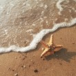 Starfish — Stock Photo #65782935