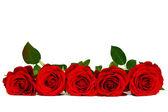 白で隔離される赤いバラ — ストック写真
