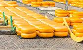 Cheese market in Alkmaar, The Netherlands — Stock Photo