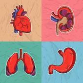 Set of human organs for Health and Medical. — ストックベクタ