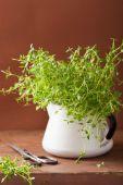 Fresh thyme herb in enamel pot — Stok fotoğraf