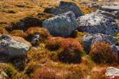 Autumn highland plants background in Norway Gamle Strynefjellsve — Stock Photo