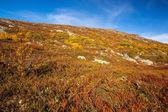 Sunny autumn landscape Norway Gamle Strynefjellsvegen — Photo