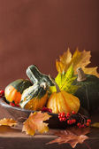 Decorative pumpkins and autumn leaves for halloween — Stock Photo