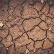 Dry soil texture  — Stock Photo #51891493