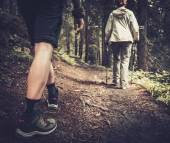 Couple with hiking poles walking in a forest  — Stock Photo