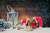 Small toy bears in christmas still life  — Stock Photo