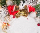 Small toy bears holding Merry Christmas sign in winter holidays still life — Stock Photo