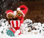 Small toy bears in christmas stoking  — Stock Photo