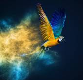 Flying Ara parrot over colourful powder explosion — Stock Photo