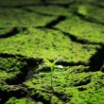 yalak ölü toprak büyüyen yeşil bitki — Stok fotoğraf #56718467